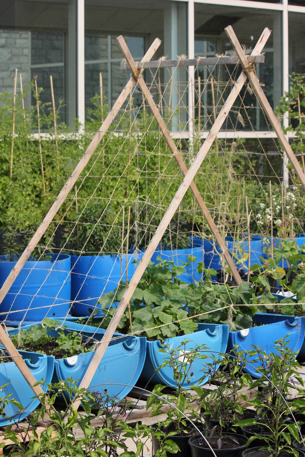 Vegetable Container Gardening Gardening College Of Agriculture
